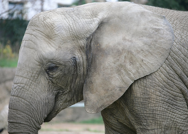 elefant 19 royaltyfria bilder