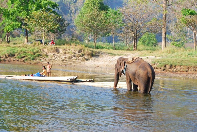 Download Elefant redaktionell bild. Bild av askfat, park, starkt - 37348726