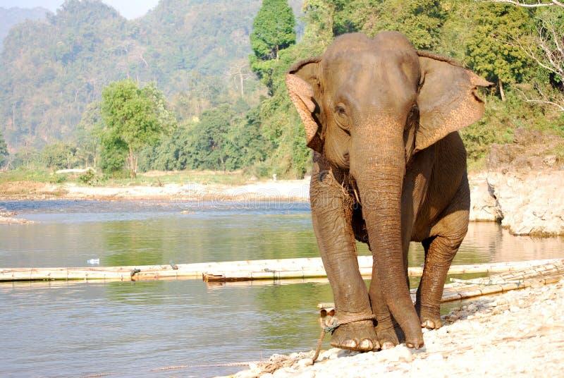 Download Elefant arkivfoto. Bild av nationellt, bifokal, natur - 37348924