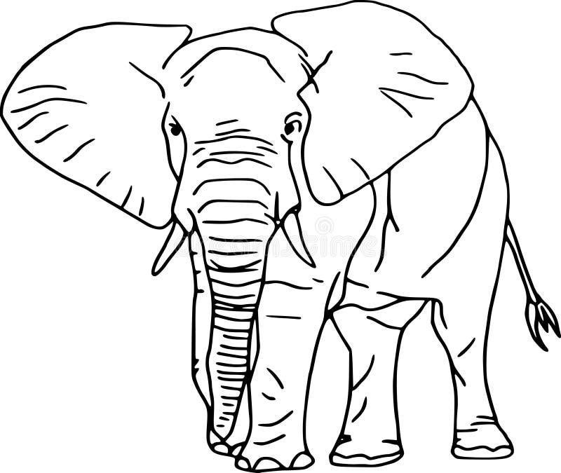 Elefant vector illustratie