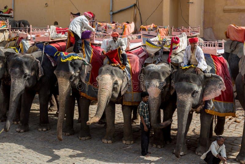 Elefant Amer fotografering för bildbyråer