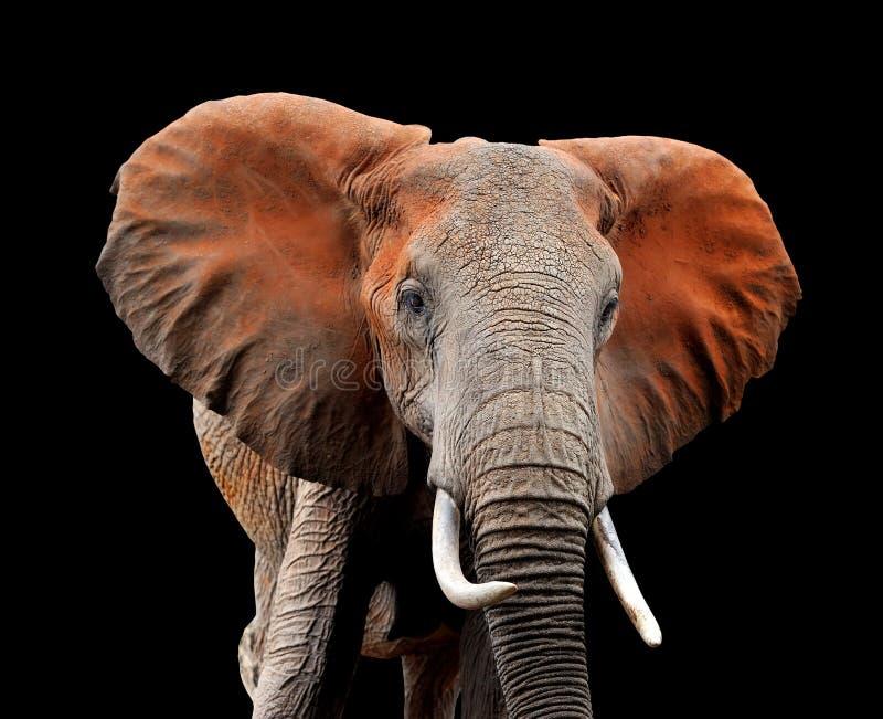 Elefant auf dunklem Hintergrund lizenzfreie stockbilder