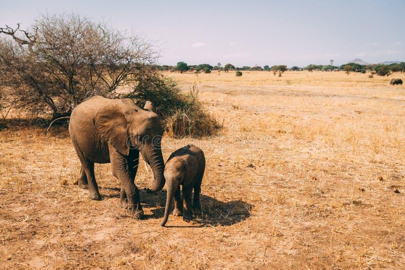 Elefant auf Safari in Tanzania lizenzfreies stockbild