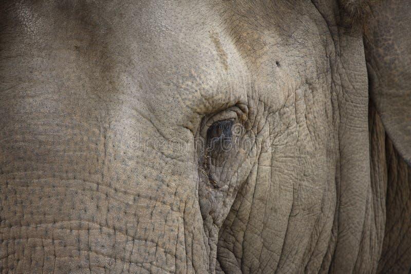 Elefant-Auge lizenzfreies stockbild