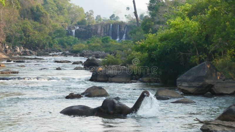Elephant spraying water; Laos Bolavenplateau royalty free stock images