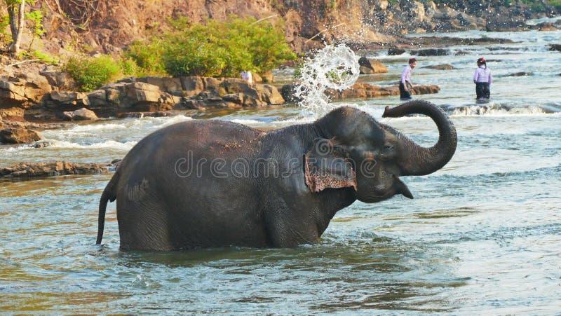 Elephant spraying water; Laos Bolavenplateau stock images
