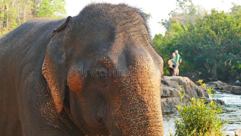 Elephant spraying water; Laos Bolavenplateau stock image