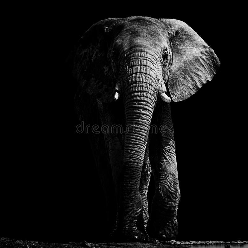 Elefant bei Waterhole stockbild