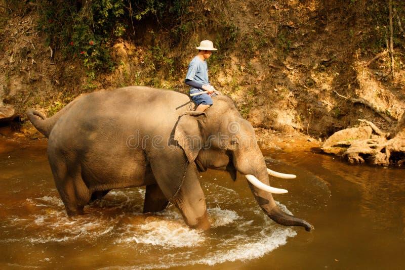 Elefant, der im Fluss- Thailand-3 badet lizenzfreies stockbild