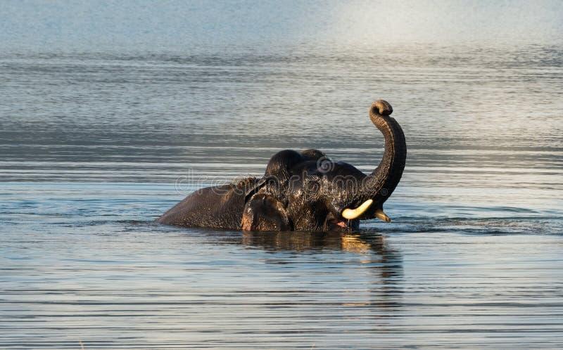 Download Elefant, Der Im Wilden Badet Stockbild - Bild von orange, bhutan: 106804483
