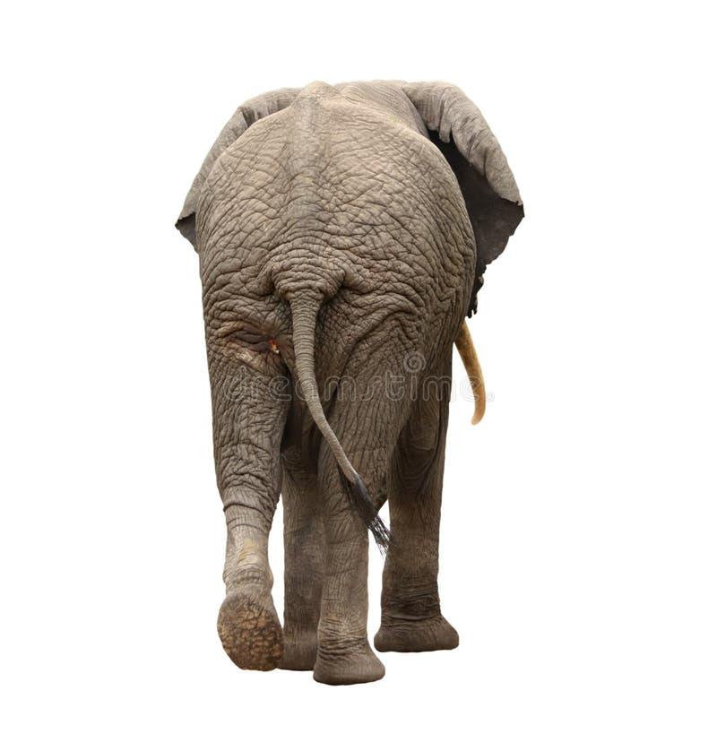 Elefant, der weg geht lizenzfreies stockbild