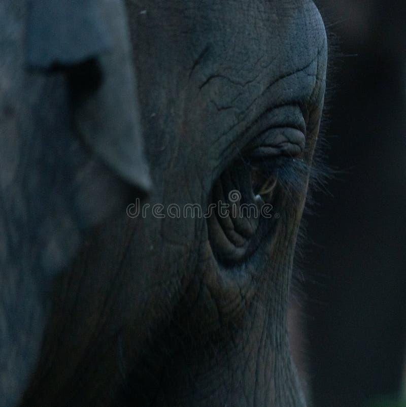 Elefant efter bad royaltyfri bild