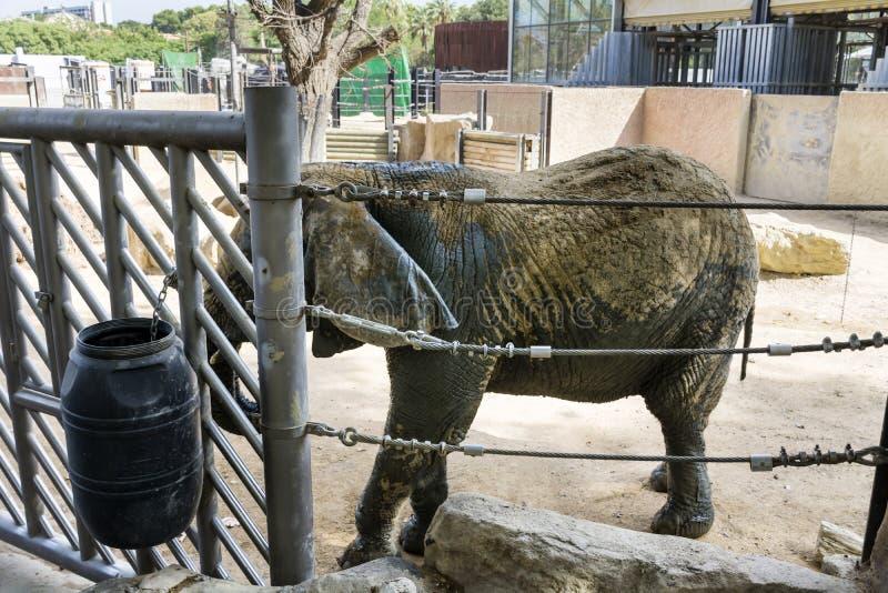 Elefant in einem Zoo stockfotografie
