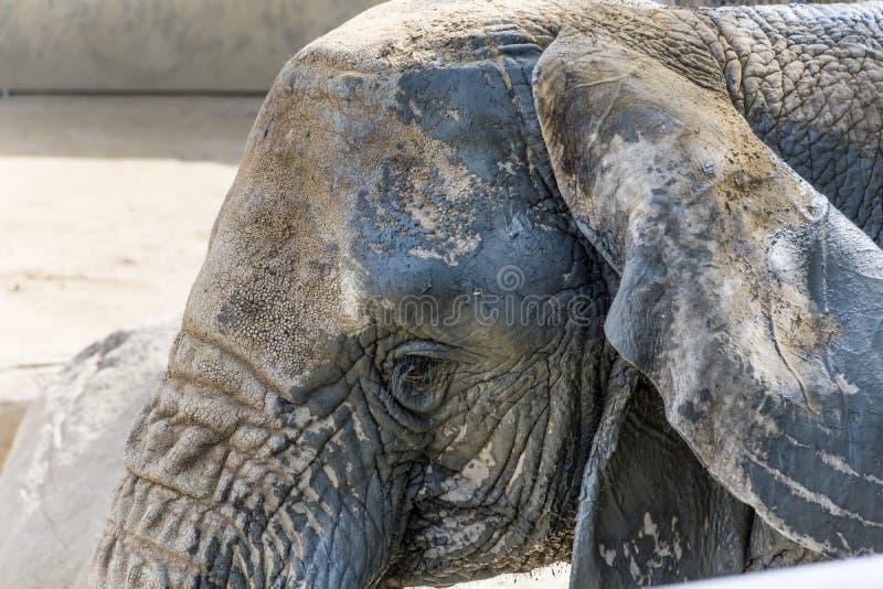 Elefant in einem Zoo stockbild