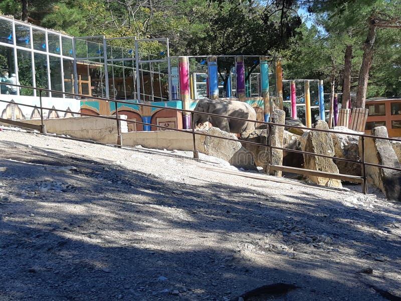 Elefant em Safari Park imagem de stock