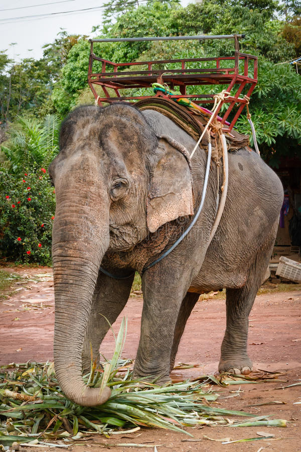 Elefant-Fahrt lizenzfreies stockbild