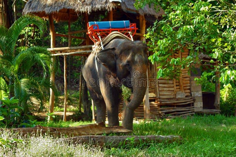 Elefant in giungla fotografia stock