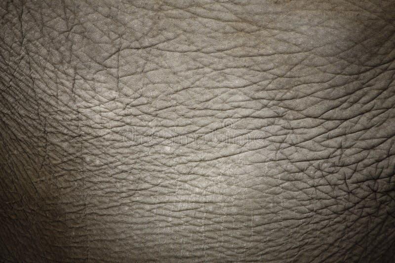 Elefant-Haut lizenzfreies stockfoto
