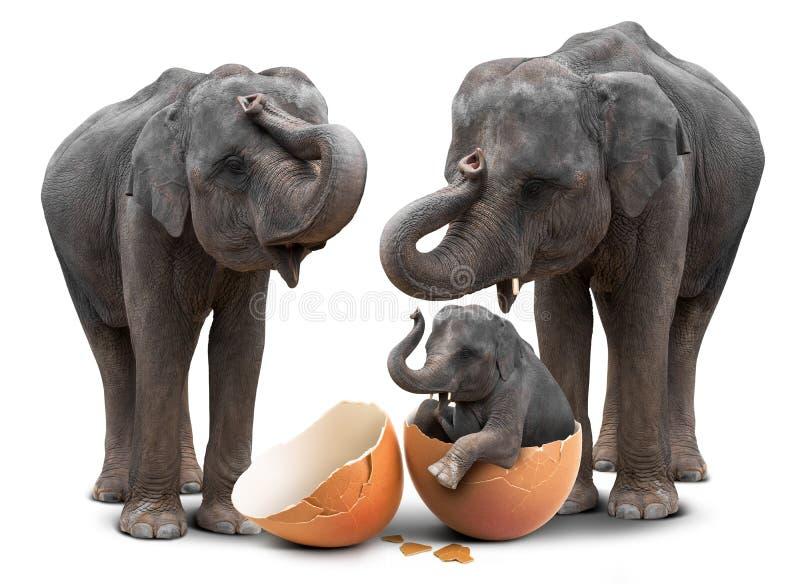 Elefant i äggskal och familj fotografering för bildbyråer