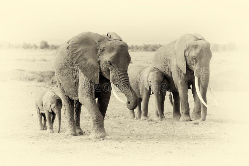 Elefant i nationalpark av Kenya Tappningeffekt arkivfoton