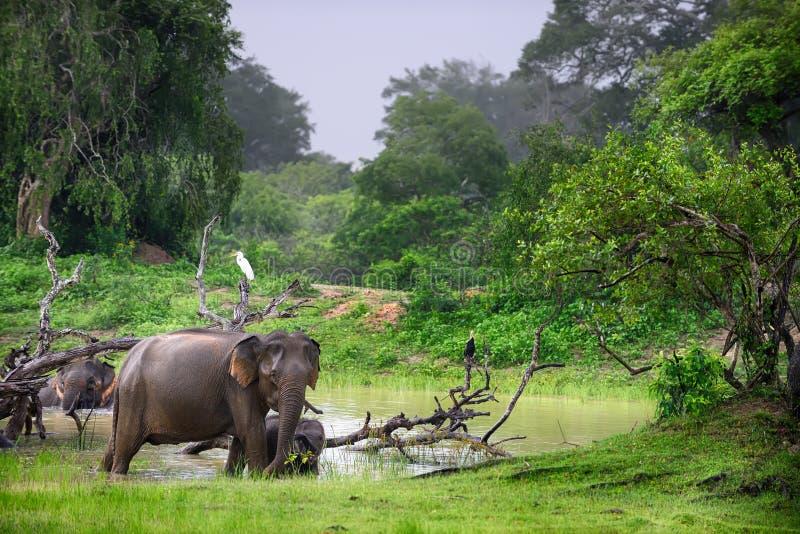 Elefant im wilden stockbild