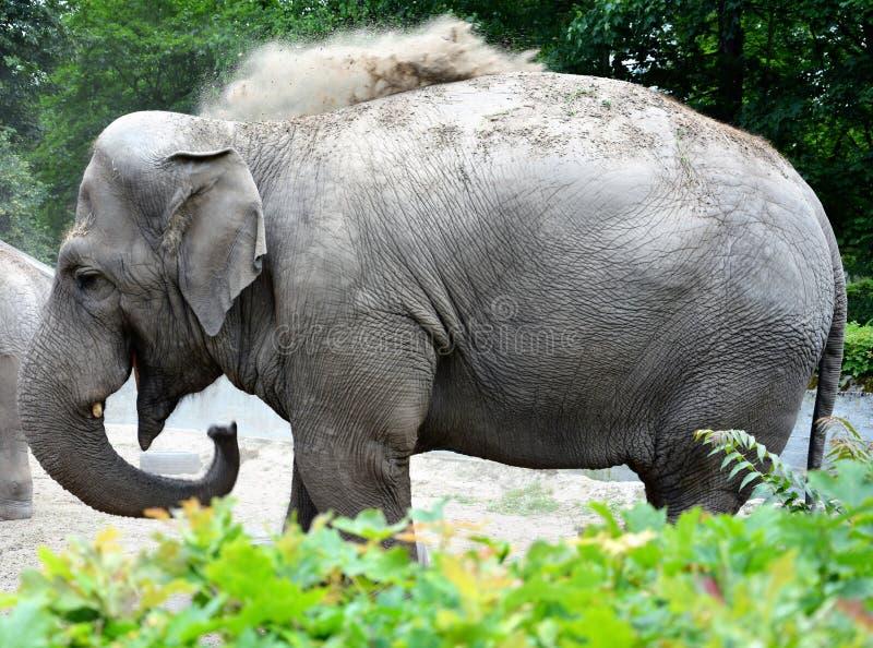 Elefant im Zoo stockfotografie