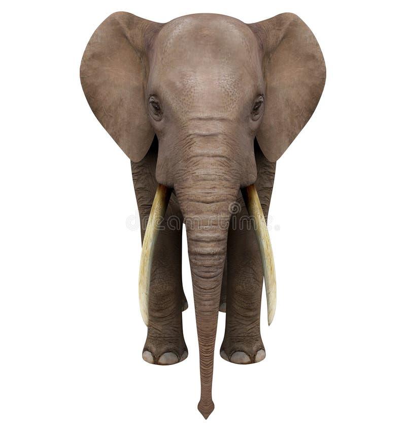Elefant. Isolerat på vit bakgrund vektor illustrationer