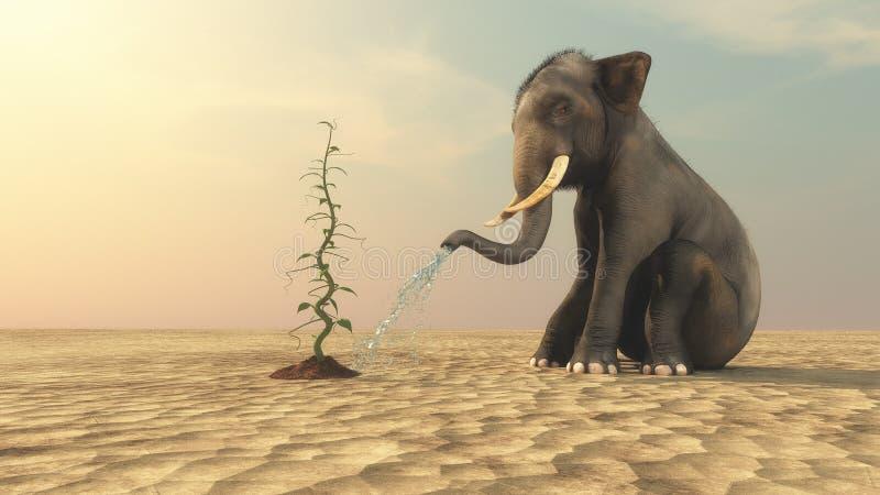 Elefant med en bönstjälk royaltyfria foton