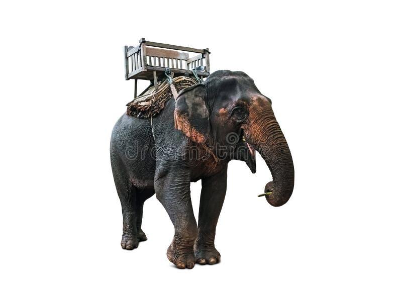 Elefant med howdahen på baksätet på elefant tillbaka för Mahout eller turister arkivbilder