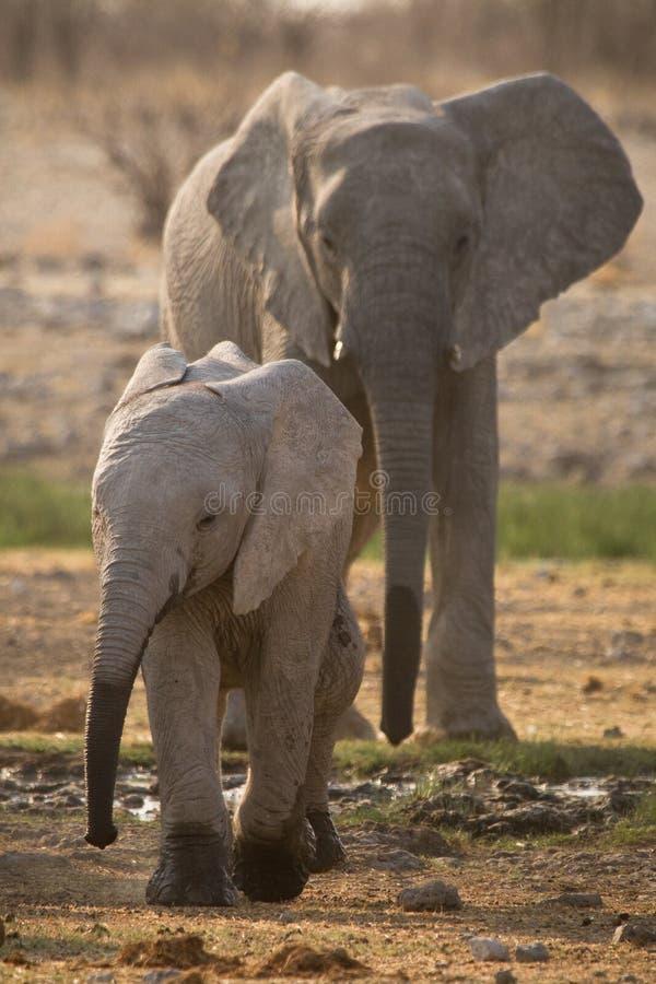 Elefant mit Schätzchen lizenzfreie stockfotografie