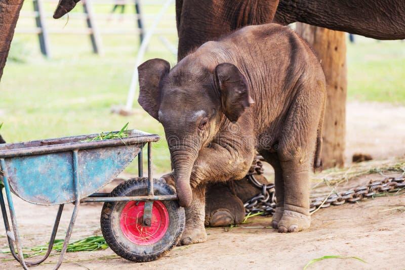 elefant nepal fotografering för bildbyråer