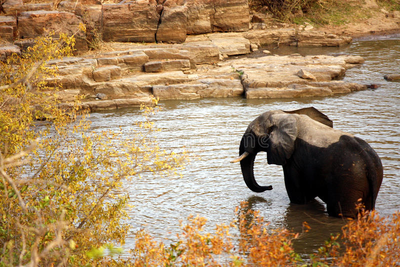 Elefant - Niger royaltyfri fotografi
