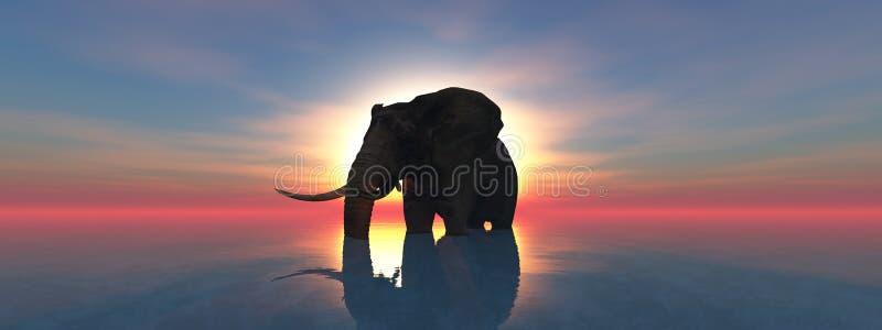 Elefant och solnedgång royaltyfri illustrationer