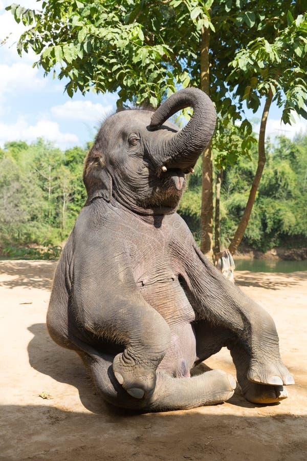 Elefant openlucht stock afbeelding