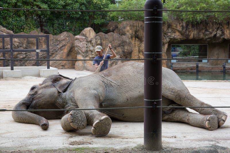 Elefant på den Ueno zoo, Japan royaltyfri fotografi