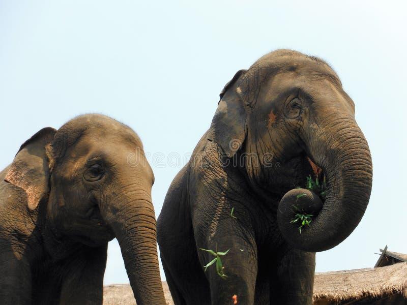 Elefant-Rehabilitation, Chang Mai, Thailand stockbild