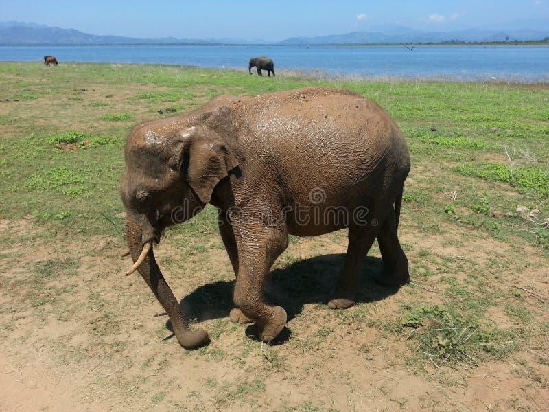 Elefant-Safari lizenzfreies stockfoto