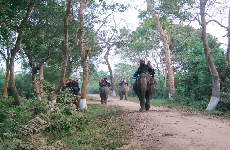 Elefant-Safari in Kaziranga lizenzfreie stockfotografie