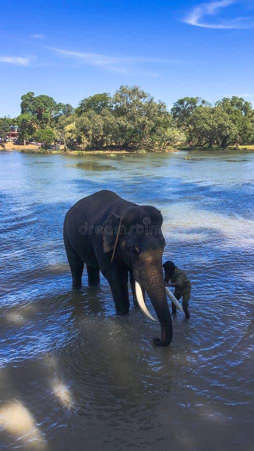 Elefant som badas i floden royaltyfri bild