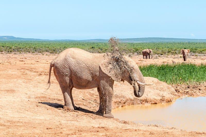 Elefant som besprutar det själv med lerigt vatten royaltyfri foto