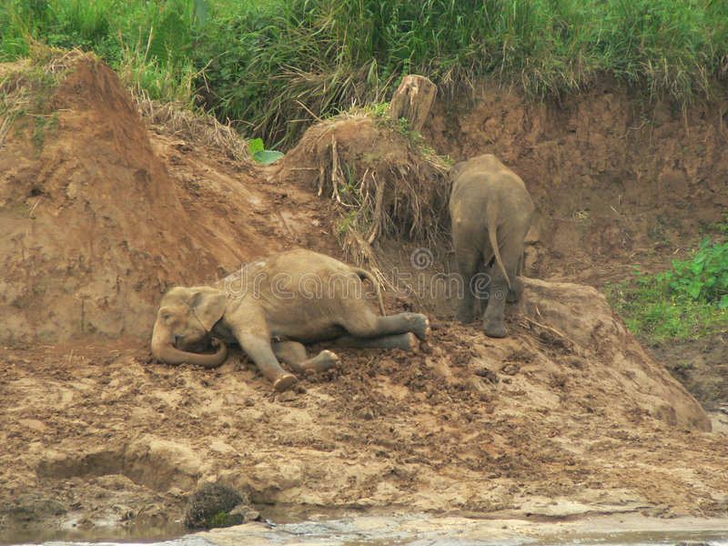 Elefant-Spielen stockfotos