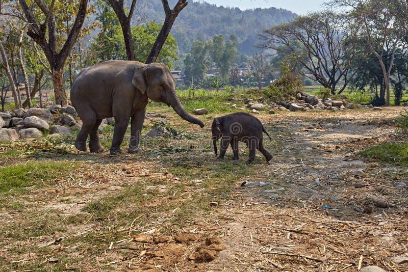 Elefant und ihr Kind stockfotografie