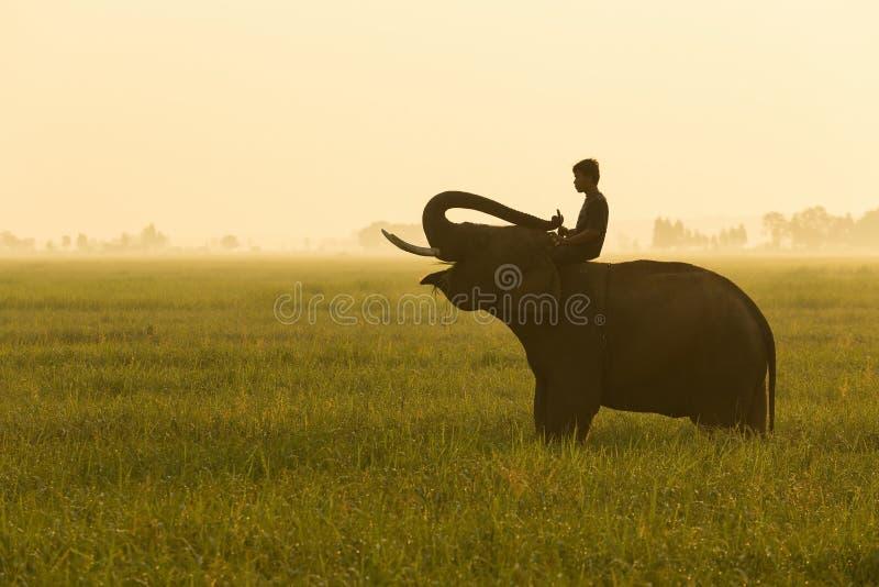 Elefant und Mahout lizenzfreies stockfoto