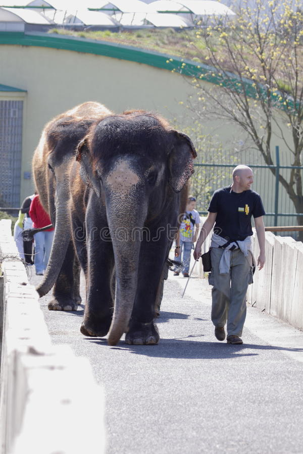 Elefantausstellung stockfotografie