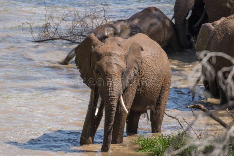 Elefantbad fotografering för bildbyråer