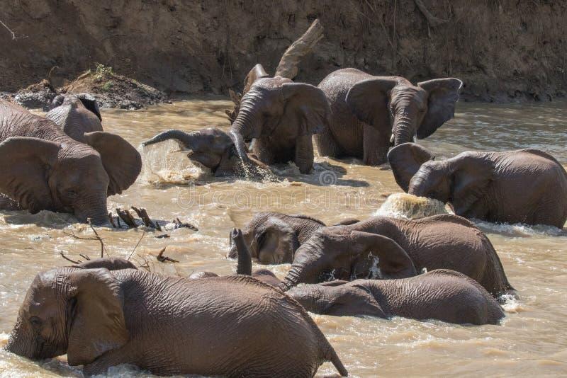 Elefantbad arkivfoton