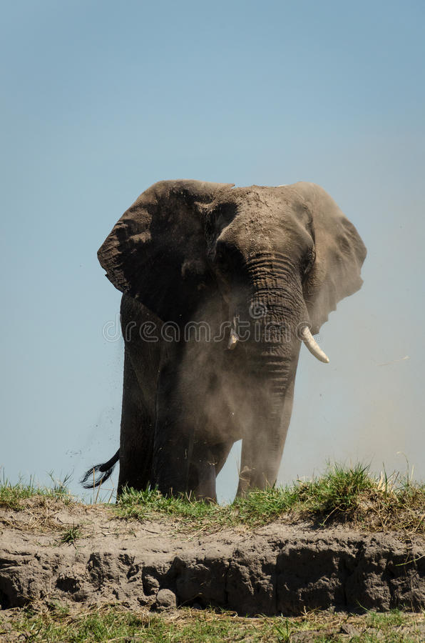 Elefantdustbath arkivfoto