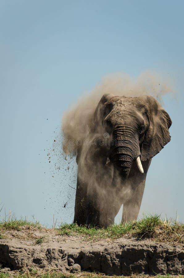 Elefantdustbath arkivbild
