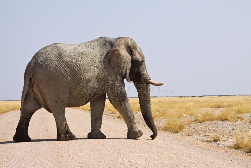 Elefante immagine stock libera da diritti