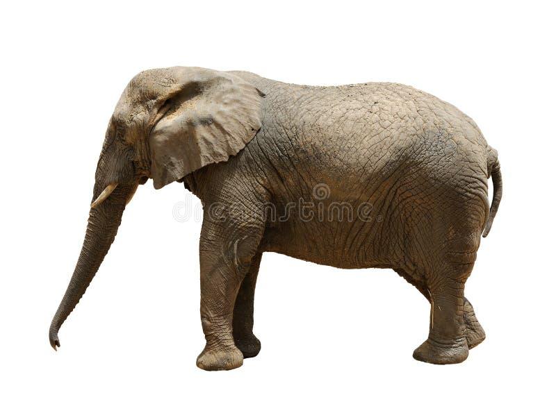 Download Elefante imagem de stock. Imagem de nave, maciço, africano - 12802679